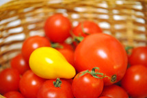 A single yellow pear tomato in a basket full of red cherry tomatoes.
