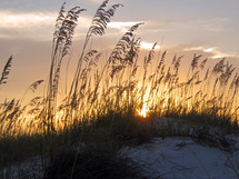 Sea oats silhouetted against the golden clouds of sunset.