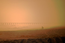 Girl in golden fog on the beach.
