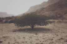 Lone tree in the Judean desert, Israel