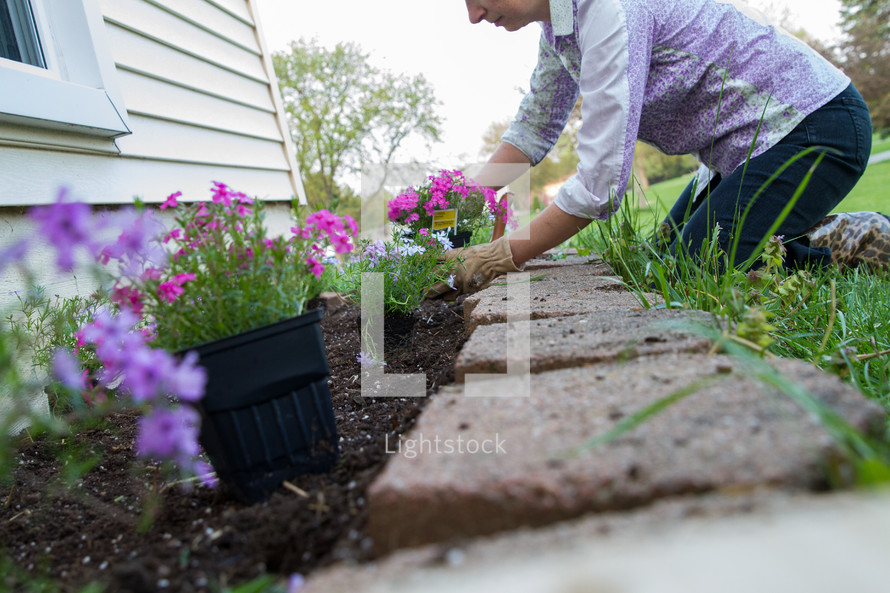A Woman Planting Flowers In A Flower Bed Photo Lightstock