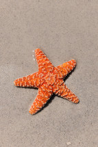 Starfish in the wet sand on the beach.