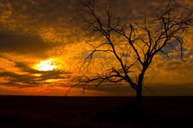 isolated winter tree at sunset