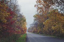 rural country road lined with fall trees