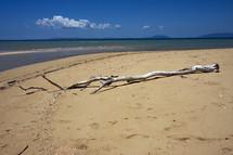driftwood on Nosy Be beach