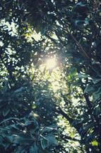 sunlight shining through leaves on a summer tree