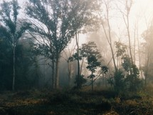 morning fog and mist in a forest