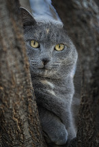 grey cat sitting in tree