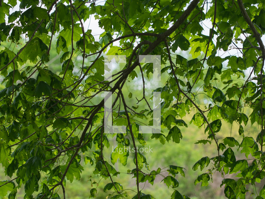 Limb of green leaves.