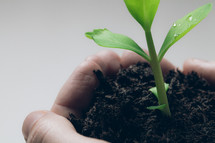 cupped hand holding soil and a plant