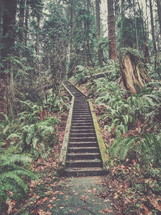 steps in a forest leading to a cabin