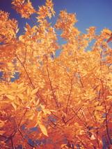 golden leaves against a blue sky