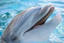 dolphin head closeup