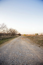 Gravel Road Lined by Mesque Trees