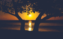 silhouette of a tree and sunset over the ocean