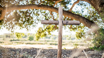 wooden cross under a tree