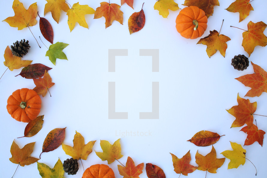 fall leaves and pumpkins on a white background