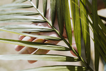palm fronds in hands