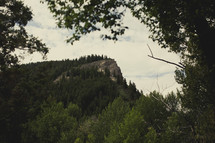tree covered mountain peak