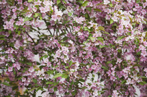 a full bloom spring tree
