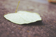 water drops a leaf