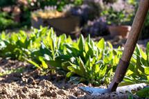 rake in a garden