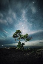 stars in a night sky over a tree along a shore