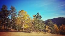 trees along a golf course edge