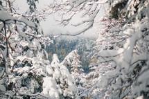 heavy snow on trees