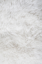 Clean and picked, white sheep fur background
