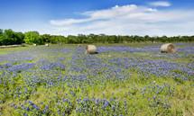 hay bales in a field of blue bonnets