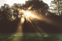 rays of sunlight shining through trees