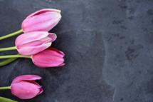 pink tulips on slate