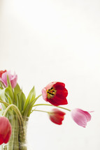 pink and red tulips in a vase