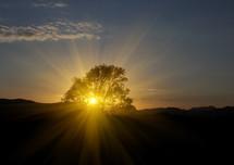 sunrise through tree branches