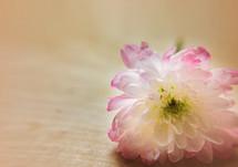 A single flower on a table.