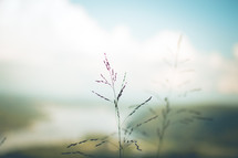 tall grass and bokeh sky