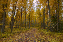 fall leaves on a trail through a forest