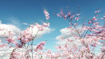 pink spring blossoms on a tree