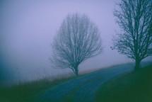 fog over a gravel road