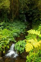 stream in a jungle