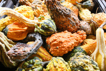 pile of bumpy gourds