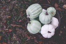 rusty bucket of teal and white pumpkins