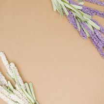 lavender and white flower on tan