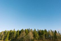 blue sky over a forest