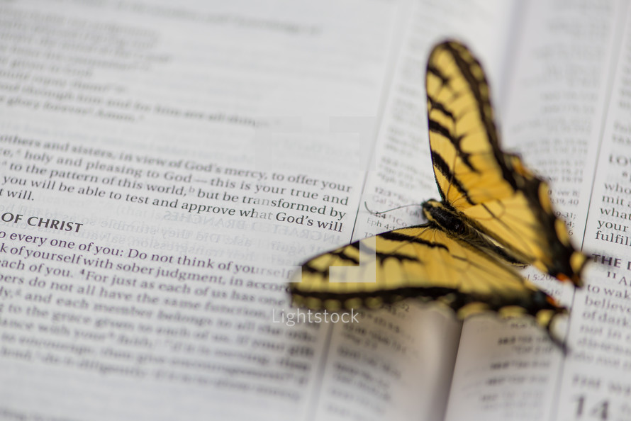 a butterfly on the pages of a Bible