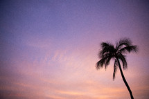 silhouette of a palm tree at sunset
