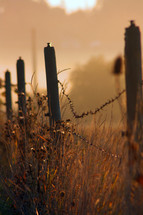 Guideposts with barbed wire in field at sunrise.