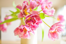pink tulips, spring flowers