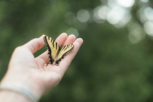 a butterfly in a hand